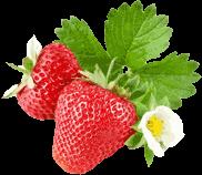 Volop lekker zoete Hollandse aardbeien